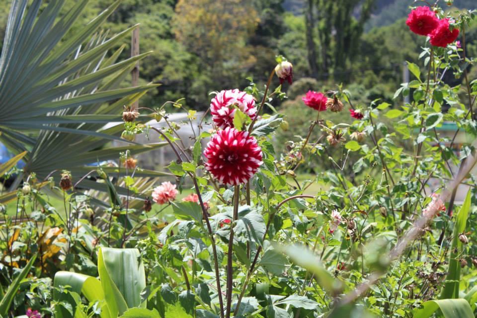 jardin-botanico-de-merida